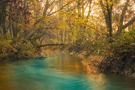 autumn forest: Flowing stream in colorful autumn forest