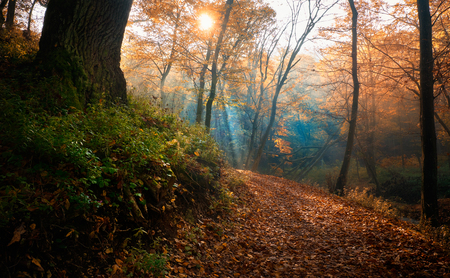 forest road: Amazing morning light in autumn forest Stock Photo