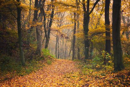 autumn forest: Autumn forest road Archivio Fotografico