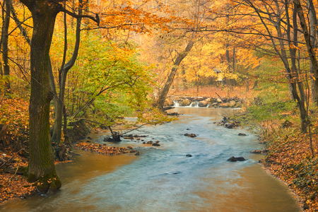 autumn forest: Flowing stream on colorful autumn forest