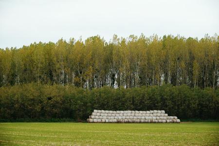 baler: Bales on field Stock Photo