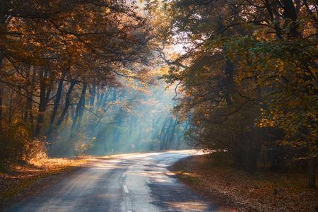 countryside landscape: autumn road