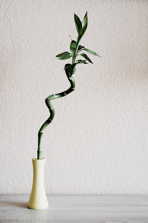 japones bambu: decoración de bambú en la habitación