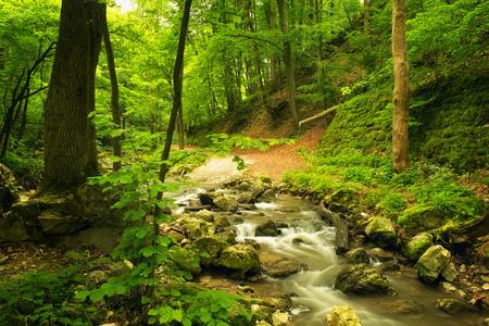 jungle scene: Flowing stream in beautiful forest