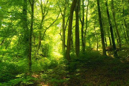Del paisaje forestal