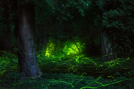 Fairytale scene fireflies night forest 스톡 콘텐츠