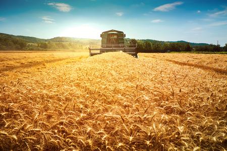 Harvester machine om te oogsten tarwe veld werken Stockfoto