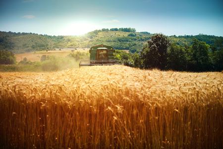 harvest field: Harvester machine to harvest wheat field working