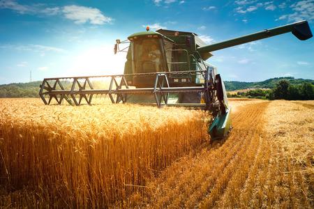 小麦のフィールド作業を収穫するハーベスタ マシン