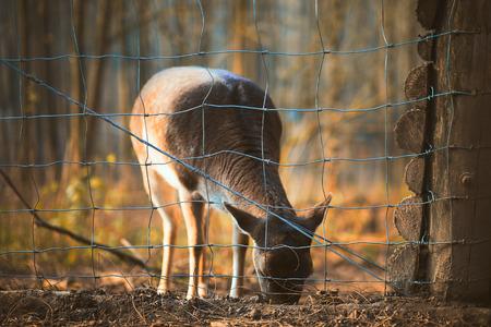 Deer in the zoo Stock Photo