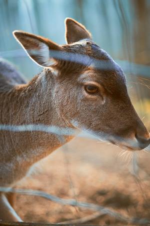 ruminants: Deer in the zoo Stock Photo
