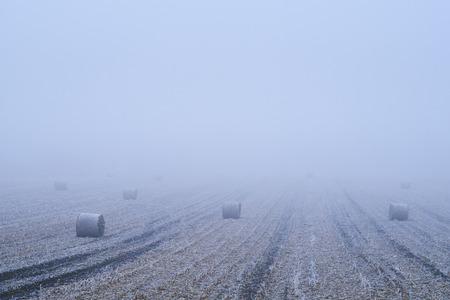 bales: Straw bales on winter field