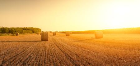 hayroll: Bales on field Stock Photo