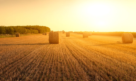 hayroll: Bales on the field