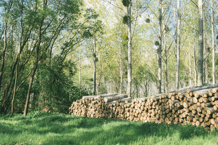 Wood pile in the forest Фото со стока