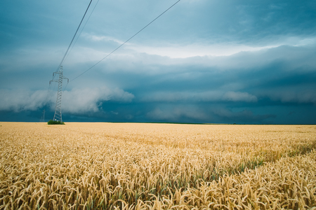over voltage: Storm over the wheat field Stock Photo