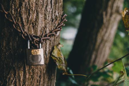 Tree locked with padlock and chain Stock Photo