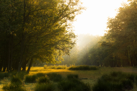Sunrays on morning meadow