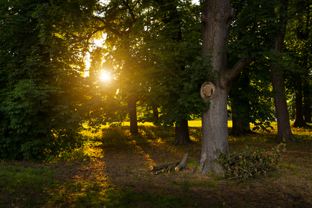 Scattering light among the trees in the woods Stock Photo