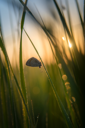 Butterfly on dewy grass Stock Photo