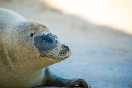 Photo of a Seal