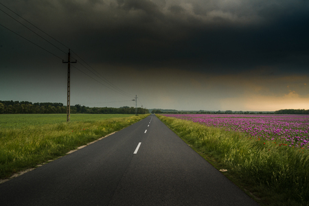 Road across opium poppy field with dramatic sky