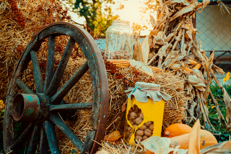 Autumn vintage decor with pumpkins Banque d'images