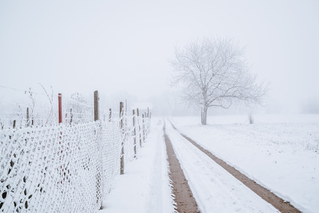 Road fence and tree on a foggy winter field