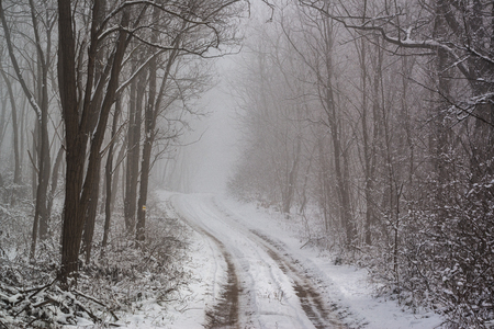 Road in snowy winter forest this is fairytale scene Stock Photo