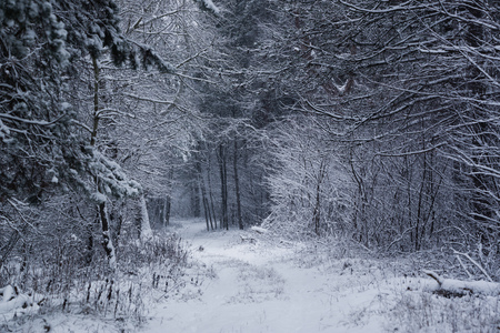 Path in the magical winterforest Stock Photo