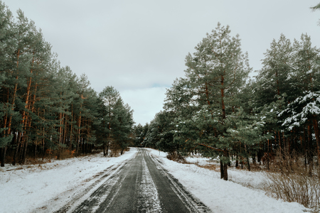 Asphalt road among trees in the winter