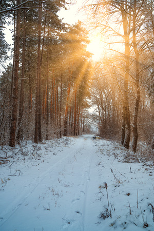 Road in winter forest and bright sunbeams