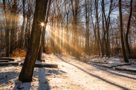 Beautiful winter sunset with trees in the snow and rays of sun Stock Photo