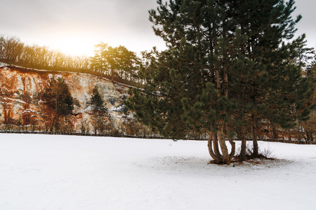 Pine tree on a winter meadow and rock wall background Stock Photo