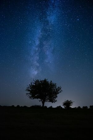 Lonely tree under the night sky milkyway
