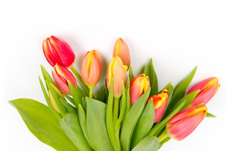 Bunch of tulips isolated on white photo