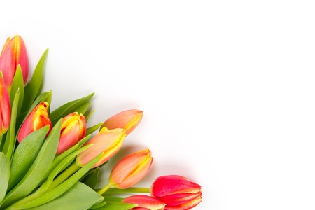 Tulip bouquet isolated on white photo