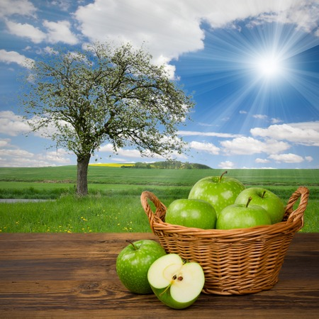 green apples in basket with apple tree on a field photo