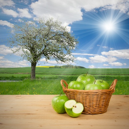 Photo of green apples in basket with apple tree on a field photo