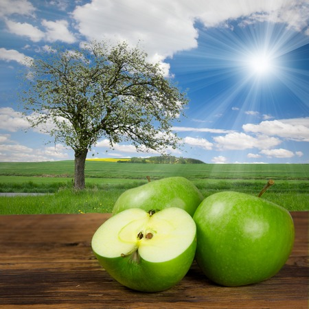 Photo of green apples with apple tree on a field photo