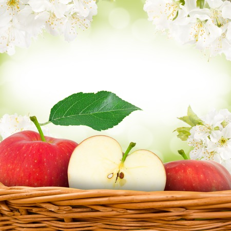green and red apples in basket. photo of red apples in basket with apple blossom background green and d