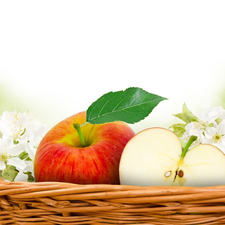 red apples in basket with apple blossom background photo