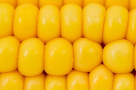 corn ear: Foto de la mazorca de ma�z de fondo abstracto