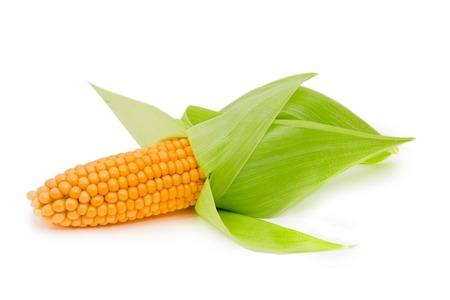 corn ear: Foto de la mazorca de ma�z con hojas aisladas en blanco Foto de archivo