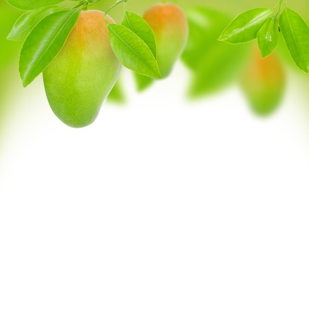 Abstract background made of mango and leaves