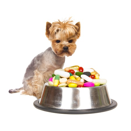 Photo of Yorkshire dog sitting next to the cup full of medicaments, concept of illness photo