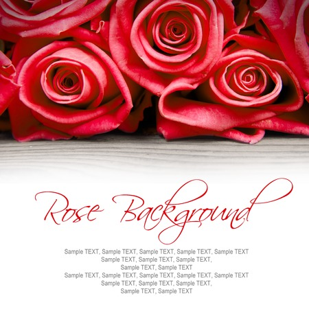 roses  petals: Abstract background made of rose blooms with white space for text