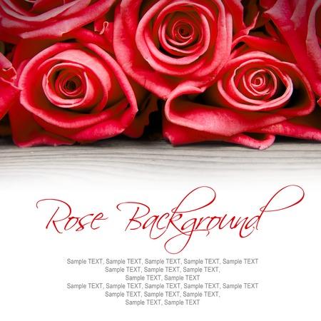 rosas rojas: Resumen de antecedentes de rosa florece con el espacio blanco para el texto Foto de archivo