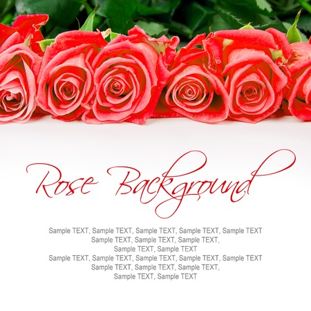 bouquet fleurs: Abstract background made of rose blooms with white space for text