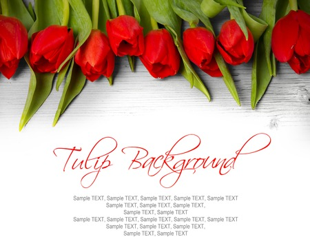 Abstract background made of tulip blooms with white space for text Standard-Bild
